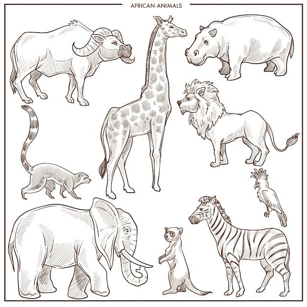Afrikanische tier- und vogelskizze. vektor lokalisierter büffelochse, giraffe oder nilpferd und löwe Premium Vektoren