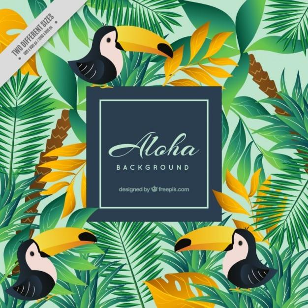 Aloha hintergrund mit tukane Kostenlosen Vektoren