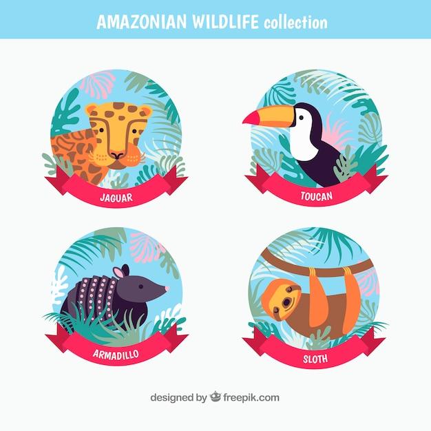Amazonas-logo-sammlung Kostenlosen Vektoren