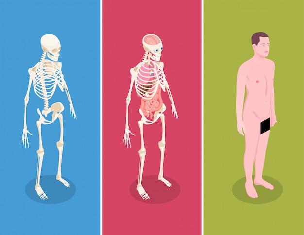 Anatomie isometrische fahnen gesetzt mit männlichem körper und zwei menschlichen skeletten auf buntem hintergrund 3d lokalisiert Kostenlosen Vektoren
