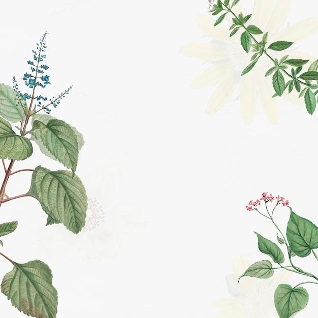 Antike botanische blätter Kostenlosen Vektoren