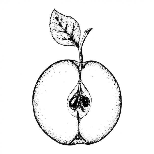 Apfel. Premium Vektoren