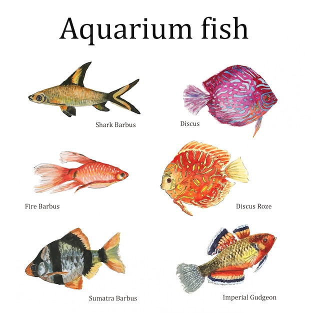 Aquarell aquarienfische Premium Vektoren