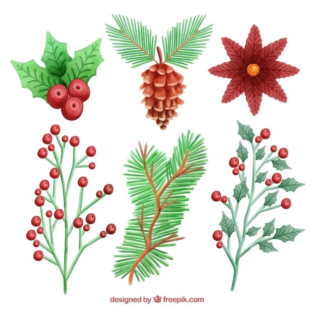 Aquarell Blumen, Blätter, Beeren und Tannenzapfen | Download der ...