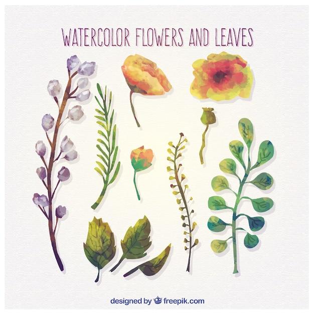 Aquarell-Blumen und Blätter | Download der kostenlosen Vektor