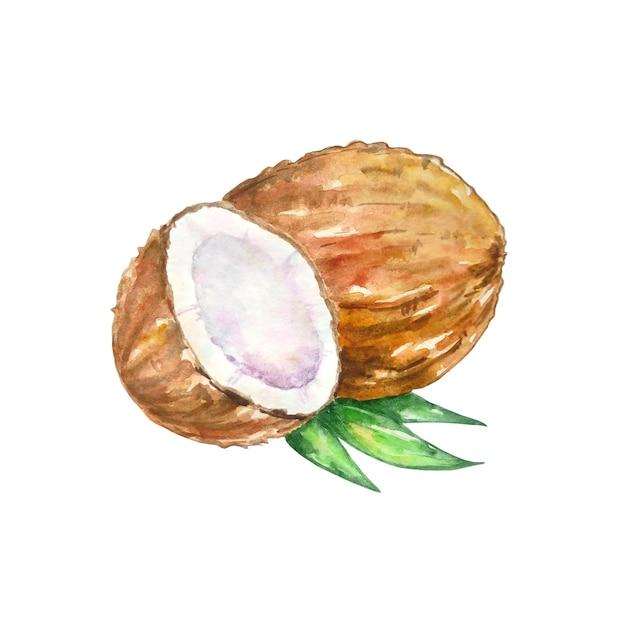Aquarell braune kokosnuss mit einer hälfte Premium Vektoren