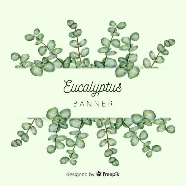 Aquarell eukalyptus verlässt banner Kostenlosen Vektoren