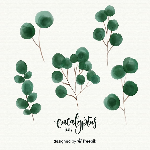 Aquarell eukalyptusblätter eingestellt Kostenlosen Vektoren
