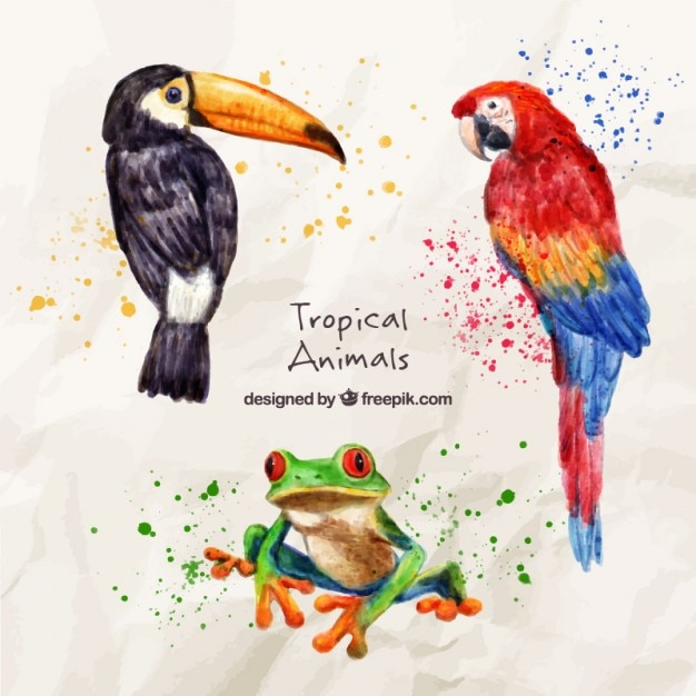 Aquarell exotische vögel mit einem frosch Kostenlosen Vektoren