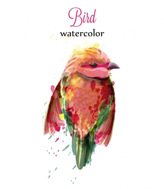 Aquarell kleiner vogel Premium Vektoren