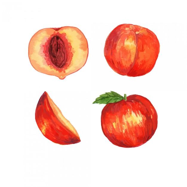 Aquarell-pfirsich-frucht-clipart-illustrationssatz Premium Vektoren