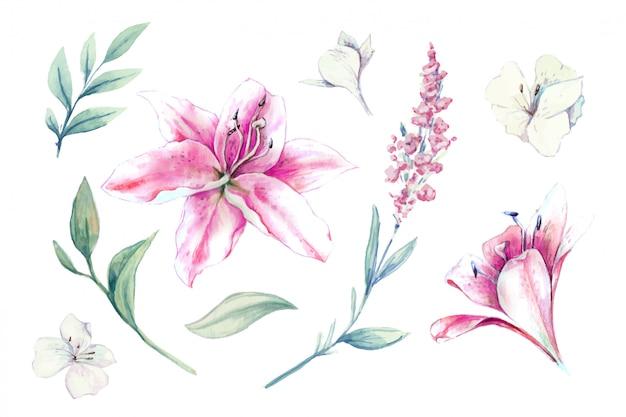 Aquarell satz von lilien, knospen und blättern Premium Vektoren