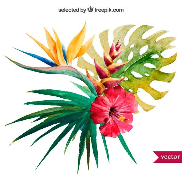 Aquarell tropische Pflanze Kostenlose Vektoren