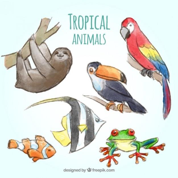 Aquarell tropische tiersammlung Kostenlosen Vektoren