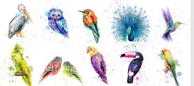 Aquarell vögel sammlung Premium Vektoren
