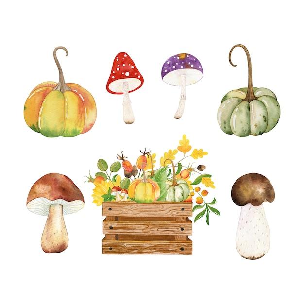 Der pilz eichel auf Pilz am