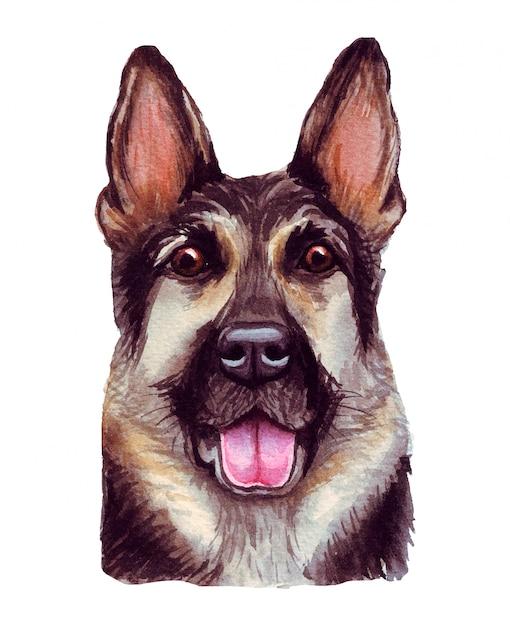 Aquarellillustration eines lustigen hundes. beliebte hunderasse. hund. deutscher schäferhund. handgemachter charakter lokalisiert auf weiß Premium Vektoren
