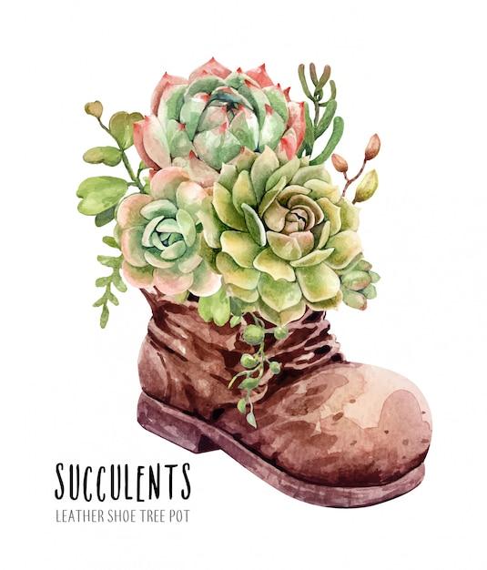 Aquarellkakteen und succulents im lederstiefelblumentopf Premium Vektoren