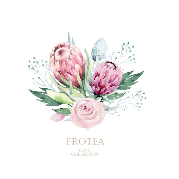 Aquarellprotea hand gezeichnete illustration Premium Vektoren