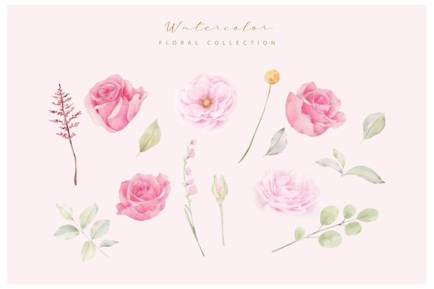 Aquarellrosa rosenblumenvektorsammlung Premium Vektoren