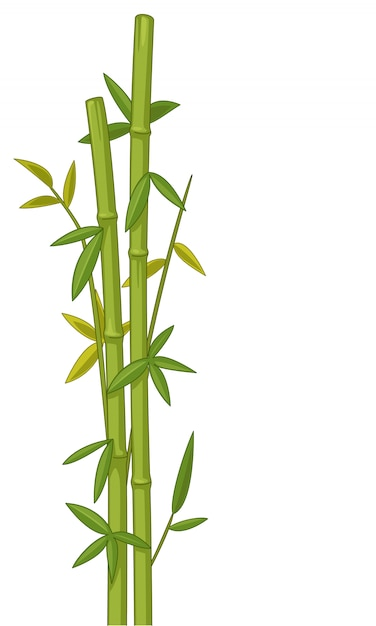 Bambus-vektor-illustration Premium Vektoren
