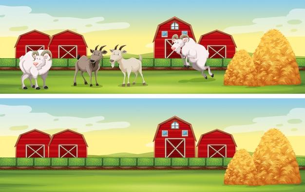 Bauernhofszene mit ziegen und scheunen Kostenlosen Vektoren