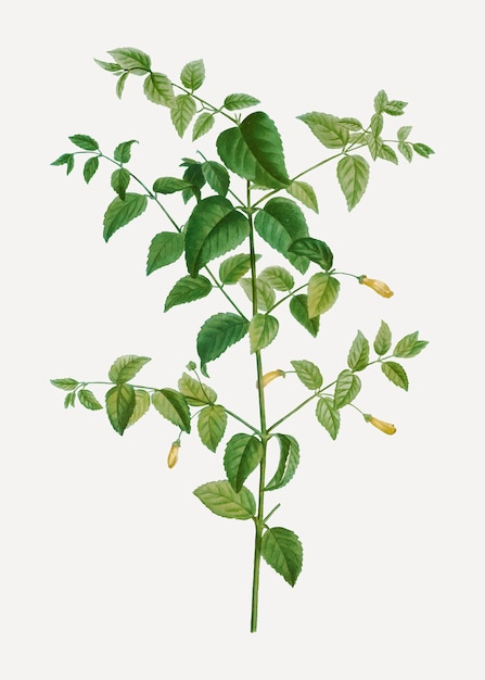 Baum fuchsia pflanze Kostenlosen Vektoren