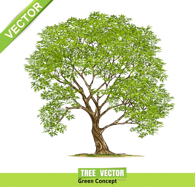 Baum, isoliert auf weiss. Premium Vektoren