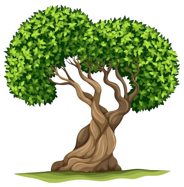 Baum mit grünen blättern Kostenlosen Vektoren