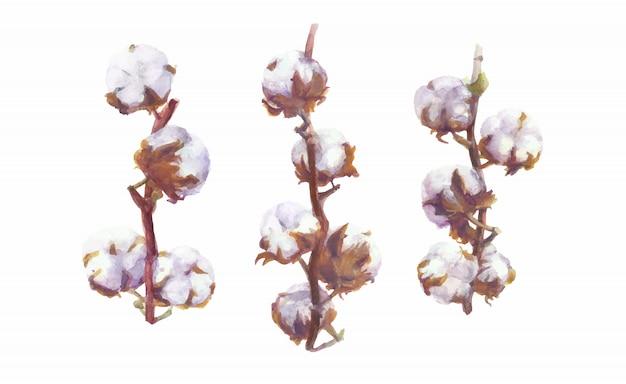 Baumwollkapseln-vektor-aquarell-niederlassungs- und kranz-malerei. handgezeichnete botanische set Premium Vektoren