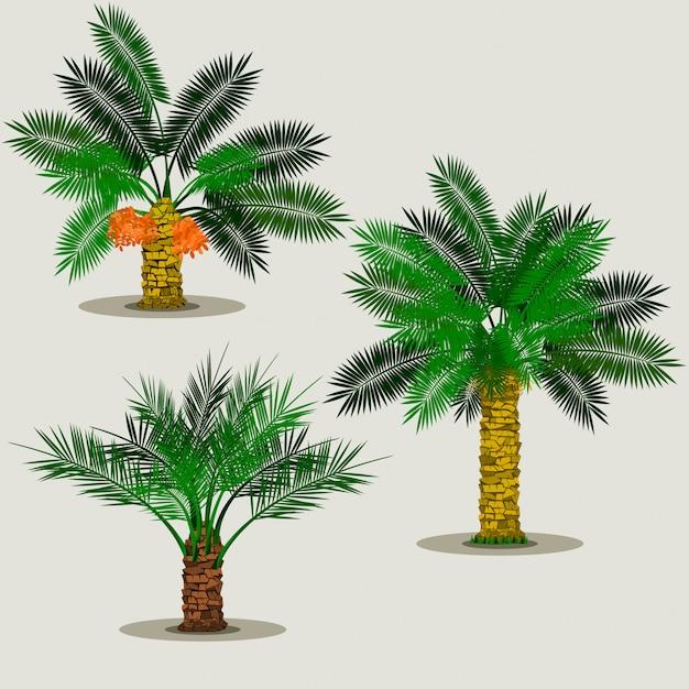 Bearbeitbare lokalisierte datums-palme-vektor-illustration Premium Vektoren
