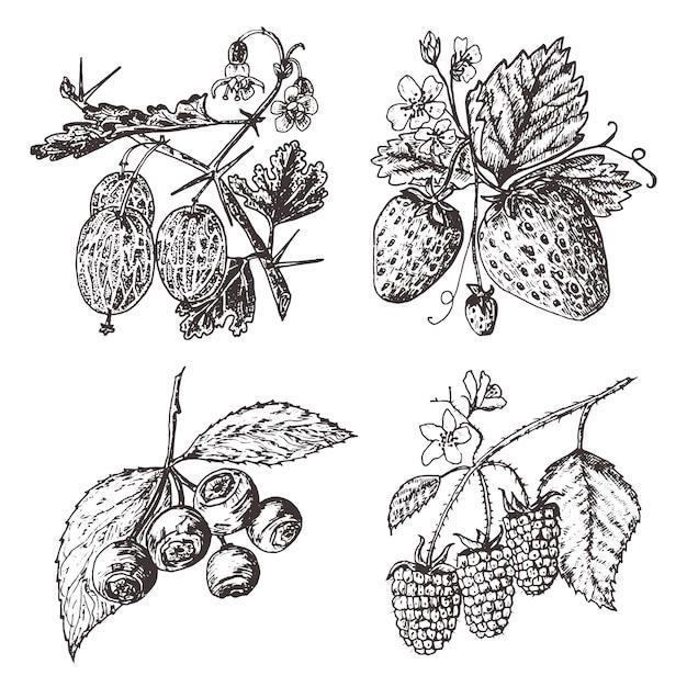 Beeren setzen. himbeere, blaubeere, erdbeere, stachelbeere. gravierte hand gezeichnet in der alten skizze, weinlesestil. feiertagsdekorelemente. vegetarische obstbotanik. Premium Vektoren