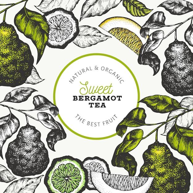 Bergamotte zweig design. kaffir kalk rahmen. hand gezeichnete vektorfruchtillustration. retro-stil zitrusfrüchte. Premium Vektoren