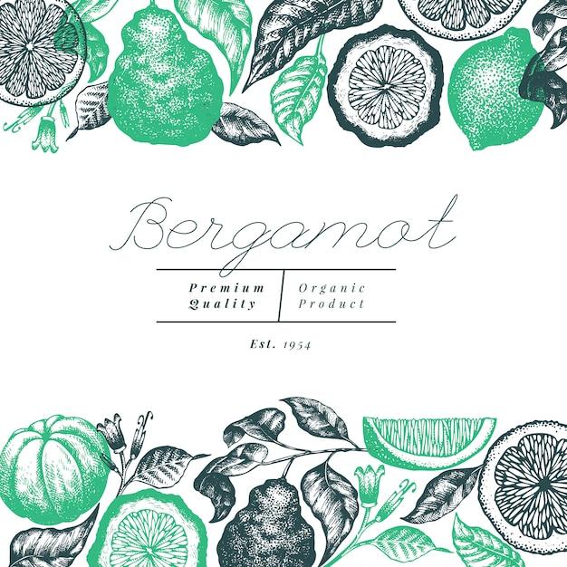 Bergamotte zweig hintergrunddesign. kaffir kalk rahmen. handgemalt. retro zitrusfrucht der gravierten art Premium Vektoren