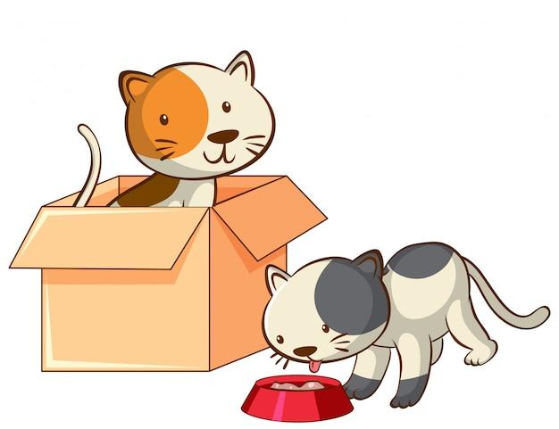 Bild von zwei katzen in der box Kostenlosen Vektoren