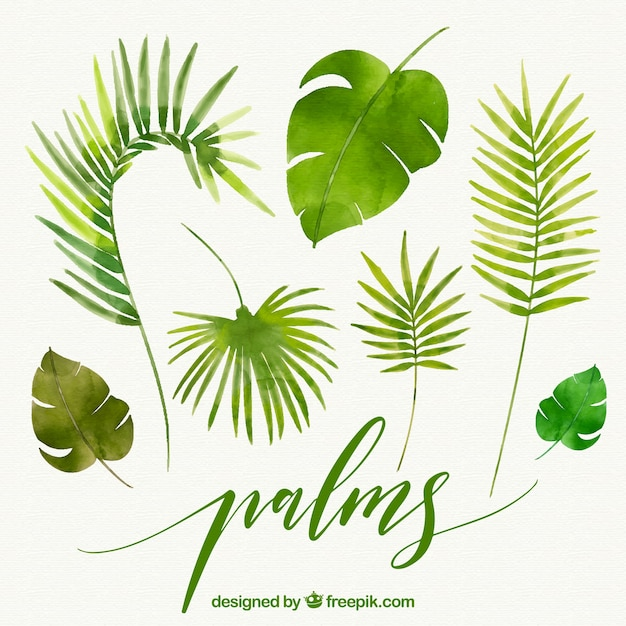 Blätter von aquarell palmen Kostenlosen Vektoren