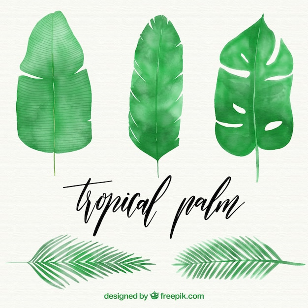 Blätter von aquarellpalmen Kostenlosen Vektoren