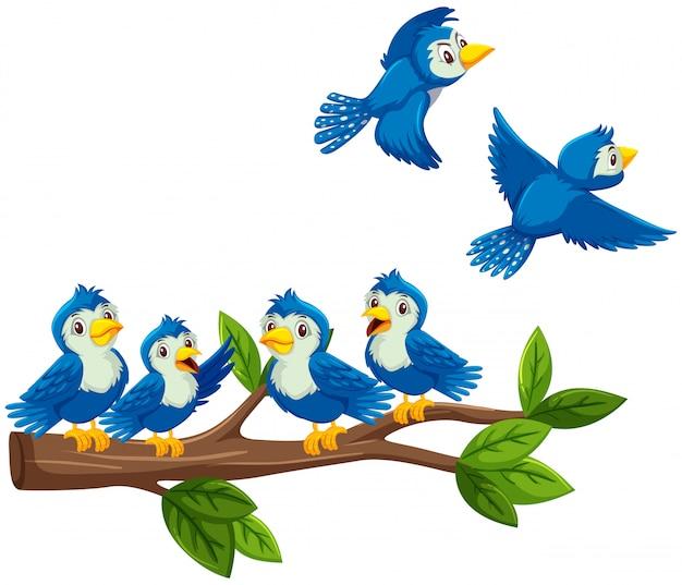 Blaue vögel auf dem zweig auf weißem hintergrund Premium Vektoren