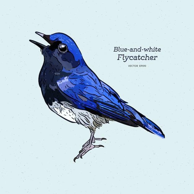 Blauer und weißer fliegenschnäpper ( Premium Vektoren