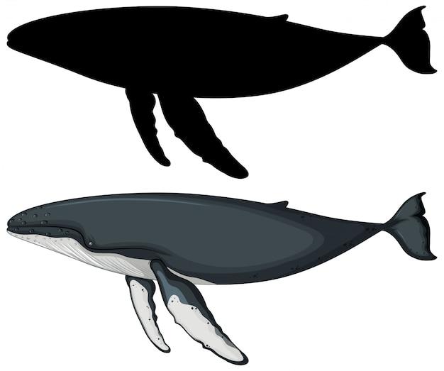 Blauwal mit seiner silhouette Kostenlosen Vektoren