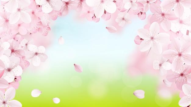 Blühende hellrosa kirschblüte-blumen Premium Vektoren