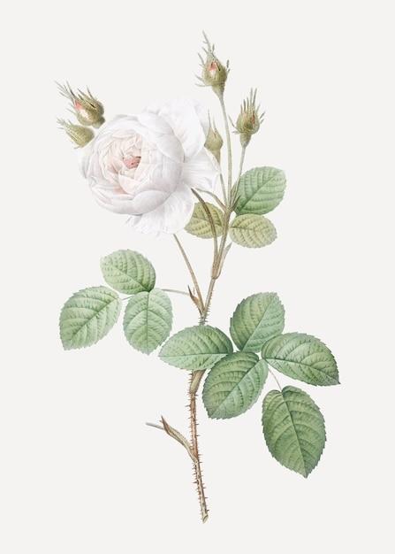 Blume Kostenlosen Vektoren