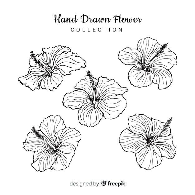 Blumen-kollektion Kostenlosen Vektoren