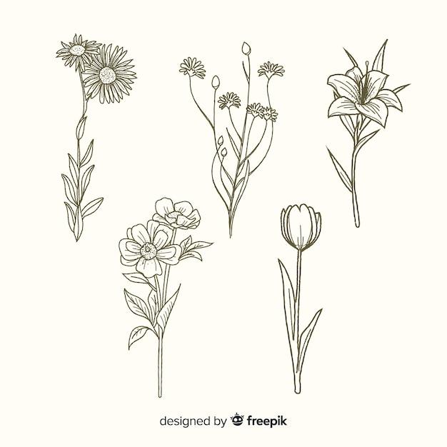 Blumen mit gezeichneter sammlung der stämme hand Kostenlosen Vektoren