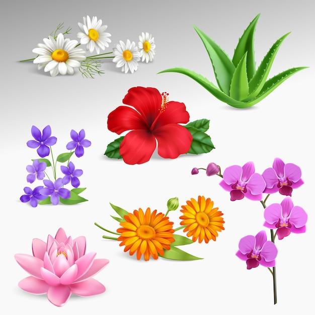 Blumen pflanzen realistische icons sammlung Kostenlosen Vektoren