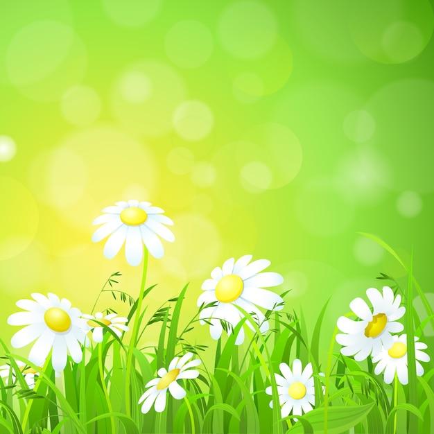 Blumen und gras auf dem feld Kostenlosen Vektoren