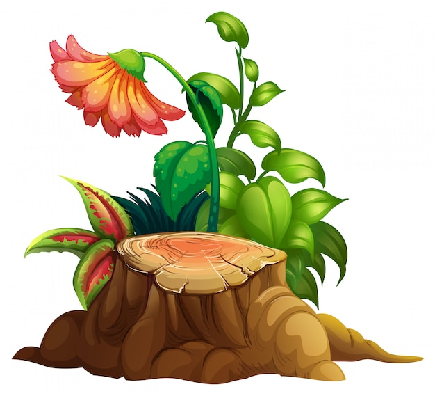 Blumen- und stumpfholz auf weiß Kostenlosen Vektoren