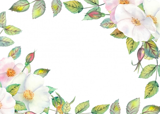 Blumen von weißen hagebutten Premium Vektoren