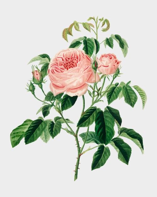 Blumen Kostenlosen Vektoren