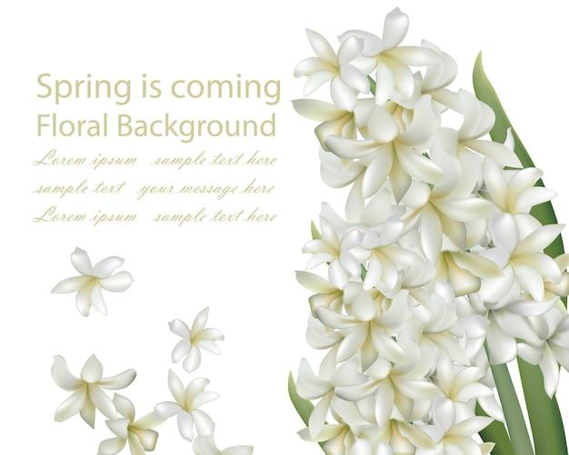 Blumenstrauß-Blumenstraußhintergrund der weißen Blume der Hyazinthe ...